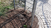 Pflanzen-Diebe am Murgufer – Stadt sucht Zeugen