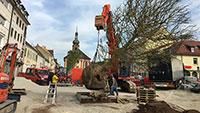 Französischer Touch für Rastatt – Platanen für die Kaiser-Baustelle sind da