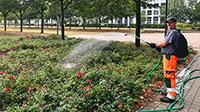 """Trockenheit bedroht die Bäume – """"Jede Gießkanne Wasser hilft den Bäumen"""""""