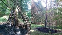 Brandanschläge auf Bäume im Rastatter Stadtwald