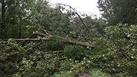 Unwetter im Rastatter Stadtwald – 150 Festmeter Holz Sturm zum Opfer gefallen – Vorsicht vor herunterstürzenden Ästen