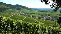 Übernachtungs-Boom im Baden-Badener Rebland – 56 Prozent Steigerung  in 10 Jahren