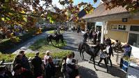 Großes Jahresfinale in Iffezheim – 17 Pferde kämpfen am Samstag um 200.000 Euro