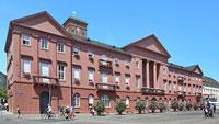 Karlsruher Rathaus testet insektenfreundliche Pflanzkombinationen