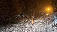 Resümee der Feuerwehr zu den Weihnachtstagen – Keine brennenden Weihnachtsbäume, dafür ein Baum auf der Fahrbahn