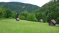 Gute Nachricht für die Natur – Managementplan für das Murgtal – Tier- und Pflanzenarten von europäischer Bedeutung