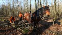 Arbeitskollege Pferd im Karlsruher Oberwald