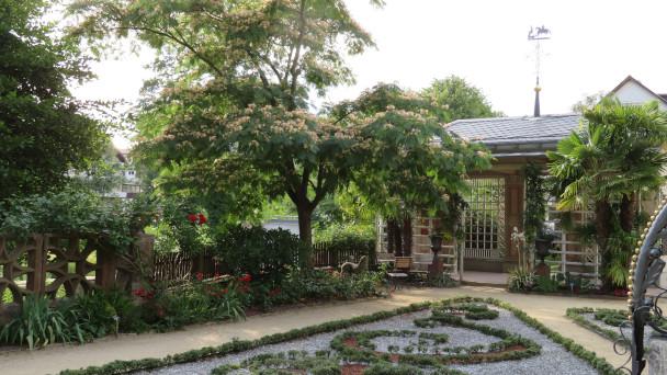 Subtrophisch anmutender Schlafbaum am Ufer der Murg - Juliführung im Katz'schen Garten