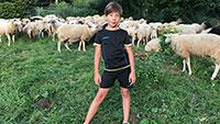 """Leserbrief """"Meine Meinung"""" – Schafherde aus Gehege in Ebersteinburg ausgebrochen – 10-jähriger Louis hat die Schafe gesucht und zusammengetrieben"""