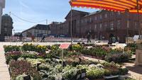 Nordhälfte des Karlsruher Marktplatzes fast fertig  - Blumenmarkt und Kübelpflanzen
