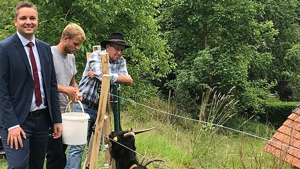 """Wertvolle Landschaftspflege in Gernsbach – Ziegen und Schafe durch """"wolfsabweisenden Zaun"""" geschützt"""