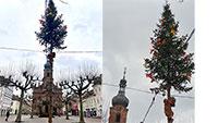 Rastatter Narren geben nicht ganz auf – Narrenbaum auf dem Marktplatz steht