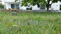 Bühler Rathaus für insektenfreundliche Gärten – NABU-Vortrag