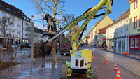 Baumschnittarbeiten auch in Rastatt – Platanen in der Innenstadt erhalten neuen Schnitt