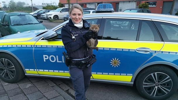 Polizei in der Nacht alarmiert: Junger Fuchs aus Gartenzaun befreit