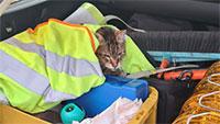Kleines Kätzchen auf der Autobahn – Polizei rettet Stubentiger am frühen Morgen