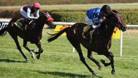 Pferderennen mit letztem Höhepunkt im Oktober - Sales & Racing Festival mit Handicap-Rennen