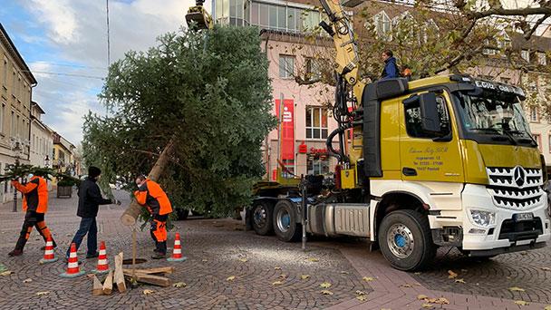 Ein bisschen Normalität in Rastatt – Zwölf Meter hoher Weihnachtsbaum steht auf dem Marktplatz