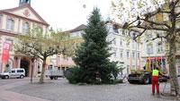 Rastatt schon jetzt auf Weihnachtsbaum-Suche – Grün und gut gewachsen soll er sein