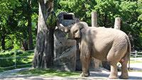 Nach langer Corona-Pause – Karlsruher Zoo startet Kartenverkauf