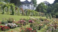 Blüten-Pracht in Baden-Baden