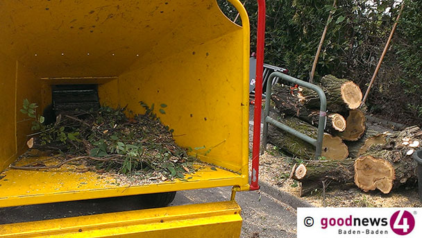Bäume fallen bei Sportschule Steinbach – Straße gesperrt