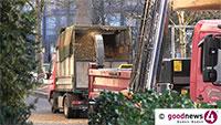 Letzter Weg des Urweltmammutbaum hinter dem Museum Frieder Burda – Abgestorbene Bäume in Allee werden entfernt