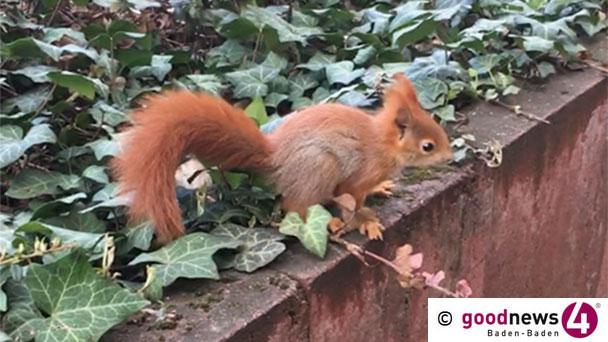 Merkwürdiges Kunstprojekt in Karlsruhe – Tote Eichhörnchen mit Bindfäden aufgehängt – Polizei beendete Aktion