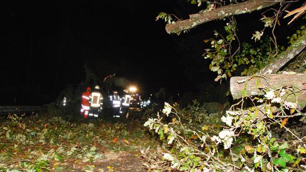 Unwetter-Bilanz der Polizei für Baden-Baden, Rastatt und Offenburg - Tanne traf vorbeifahrenden Citroen