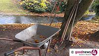 Miniermotten greifen Kastanienbäume an – Schaden in Baden-Badener Alleen am braunen Laub erkennbar