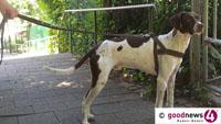 Rathaus mahnt: Hunde gehören an die Leine