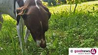 Tote Hunde in Iffezheim und Durmersheim - Polizei warnt erneut Hundebesitzer vor präparierten Ködern