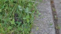 """Ärger wegen Hundekot in Gaggenau – """"Manchmal fliegt er einem regelrecht um die Ohren"""""""