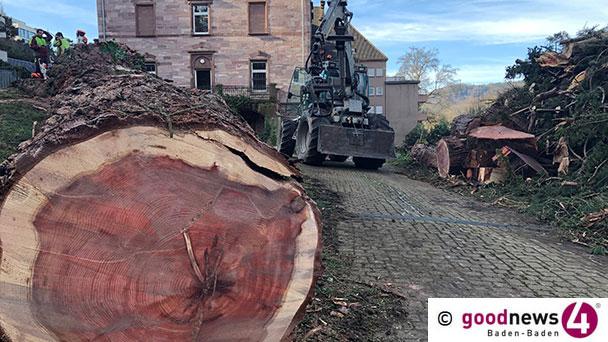 Der Tod eines Mammutbaumes in Baden-Baden – Ohne ein Wort des grünen Gewissens