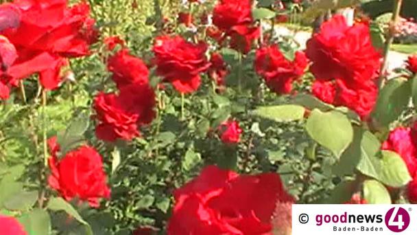 Roseneuheitengarten geschlossen wegen Wettbewerb