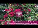 Die Goldene Rosen von Baden-Baden 2020