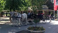 Stadtrat Werner Schmoll hat eine Antwort auf Hoch Annelie - Schattenplätzchen in Baden-Baden