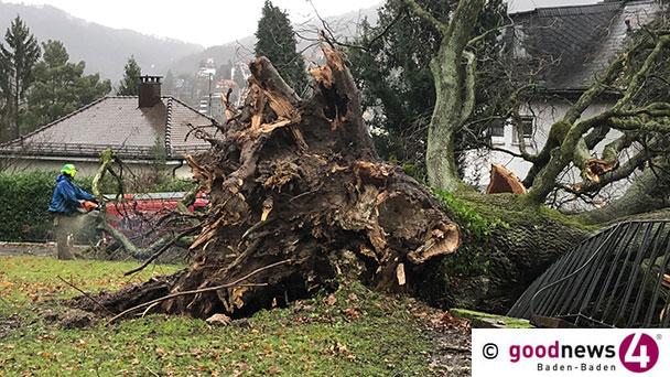 Umgestürzte Bäume in Lichtentaler Allee und auf Päda-Schulweg - 26 Einsätze der Baden-Badener Feuerwehr