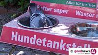 """Plage auch in Baden-Baden – Eine Taube hinterlässt zwölf Kilo Kot pro Jahr – Veterinäramt: """"Tauben nicht füttern"""""""