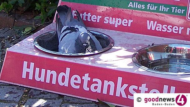 Staatsanwaltschaft Baden-Baden stellt Ermittlungsverfahren gegen Tierschützer ein