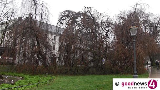 Hommage auf den traurigsten Baum Baden-Badens – Von Christian Frietsch