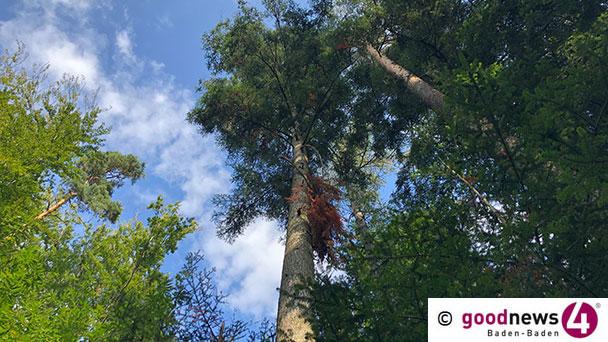 Kritischer Waldzustand im Landkreis Karlsruhe – Naturschutzbeauftragte helfen wo es geht