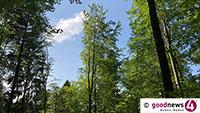 Fast jeder zweite industriell gefällte Baum weltweit zu Papier verarbeitet – Baden-Badener Rathaus mahnt zum Altpapiersammeln