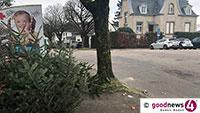 Und schon geht ihre Zeit wieder zu Ende – Weihnachtsbäume werden gesammelt
